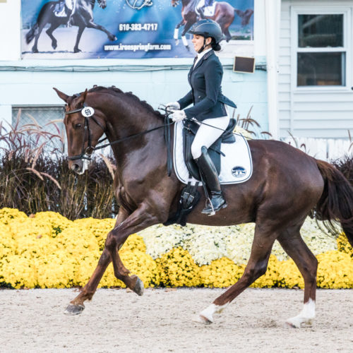 Dressage at Devon 2017 Purple Horse Designs-1378